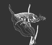 Waterbug on leaf illustration.